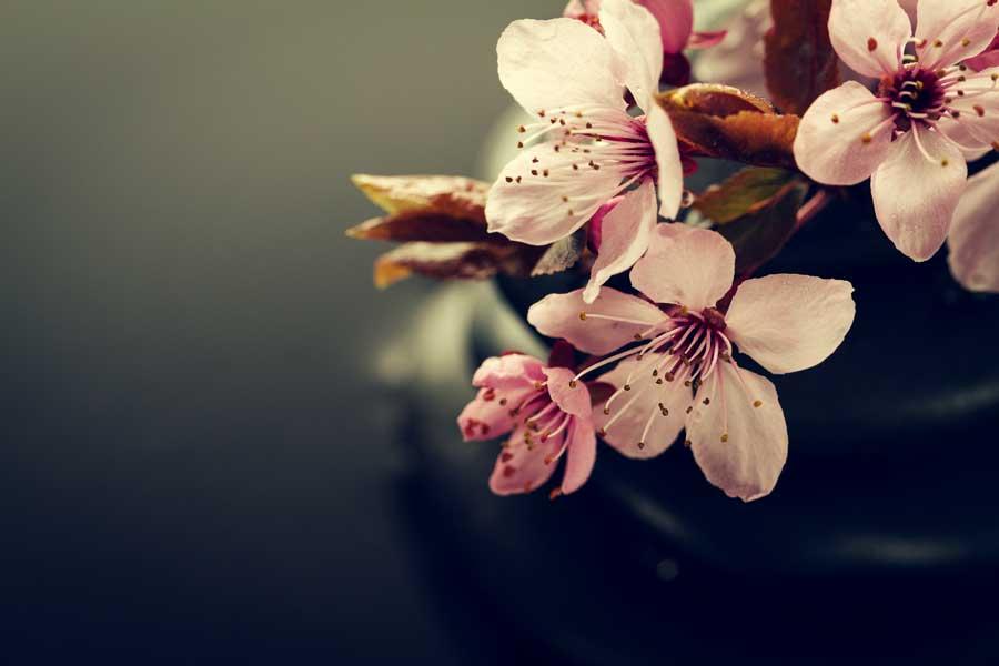 My Bullet online fleurs sérénité